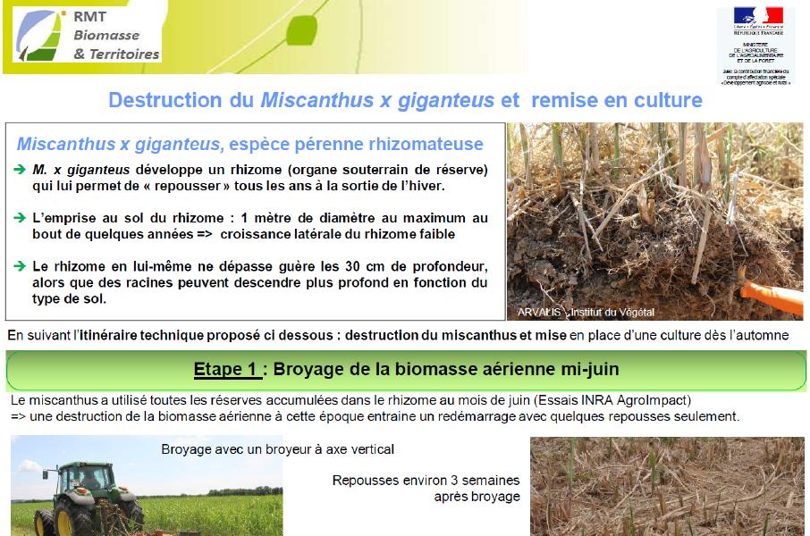 Destruction Du Miscanthus Et Remis En Culture : Fiche RMT Biomasse